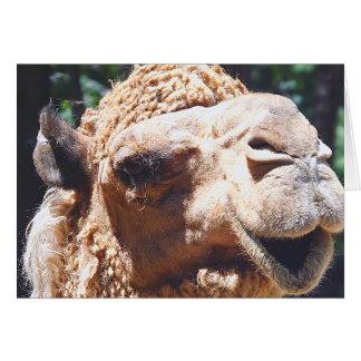 Carte Plan rapproché de visage de chameau de bosse du