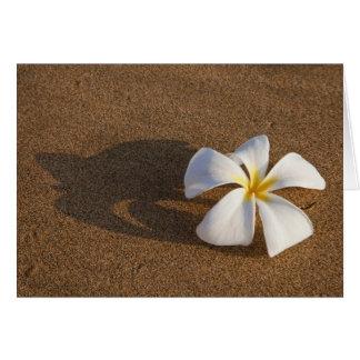 Carte Plumeria sur la plage sablonneuse, Maui, Hawaï,