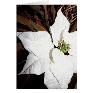 Carte Poinsettia blanche