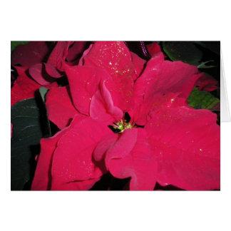 Carte Poinsettia rouge - bonnes fêtes