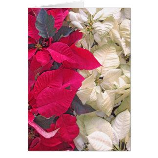 Carte Poinsettia rouge et blanche
