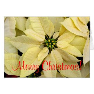 Carte Poinsettias blanches