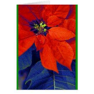 Carte Poinsettias et feuille bleu