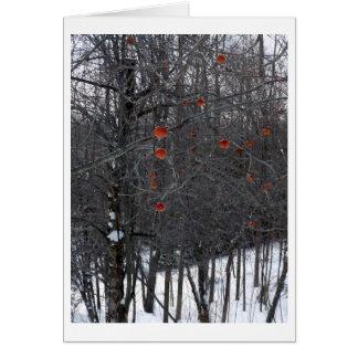 Carte Pommes d'hiver de Berkshire