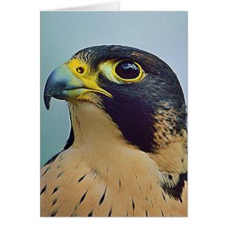 Carte Portrait de faucon de Pelegrine