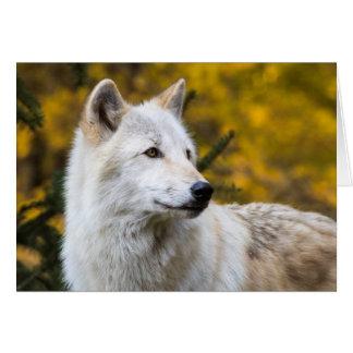 Carte Portrait de loup gris sur l'or