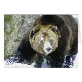 Carte Portrait d'ours gris dans la neige