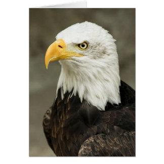 Carte Portrait majestueux d'aigle chauve
