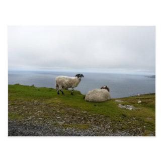 Carte Postale 2 Sheeps