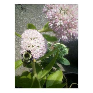 Carte Postale abeille de chardon de milkweed