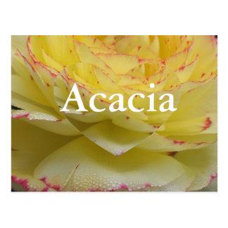 Carte Postale Acacia
