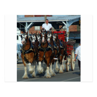 Carte Postale Accroc de cheval de Clydesdale 6