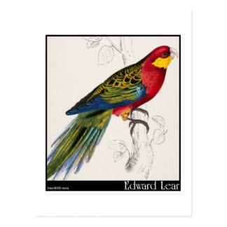 Carte Postale Adulte de perruche de Stanley d'Edward Lear