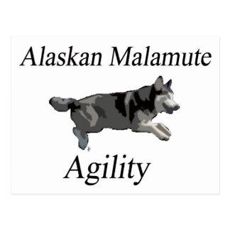 Carte Postale Agilité de Malamute d'Alaska