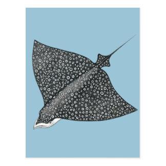 Carte Postale Aigle de mer
