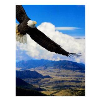 Carte Postale Aigle du Montana