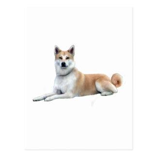 Carte Postale Akita (Akita Inu) - se couchant