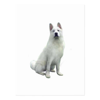 Carte Postale Akita - blanc