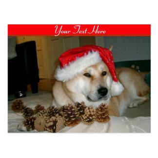Carte Postale Akita mignon dans le casquette rouge de père Noël