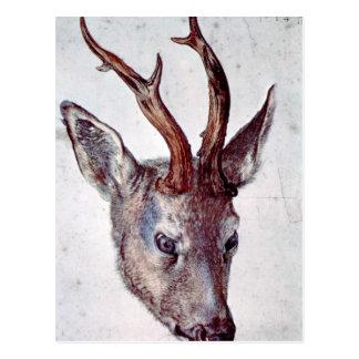 Carte Postale Albrecht Durer - chef d'un cerf commun