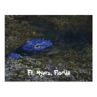 Carte Postale Alligator de Fort Myers