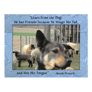 Carte postale amish. Proverbe de chien. Ajoutez