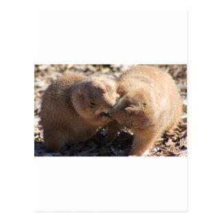 Carte Postale Amour de chien de prairie