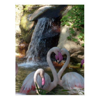 Carte Postale Amour de flamant