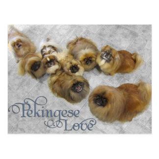 Carte Postale Amour de Pekingese