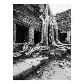 Carte Postale Angkor Cambodge, merci arbre de Prohm