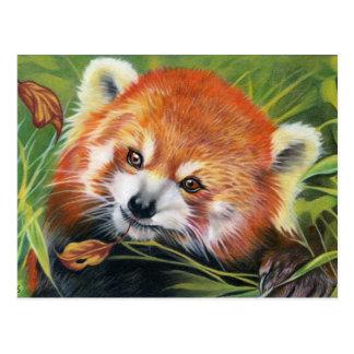 Carte postale animale d'art de panda rouge