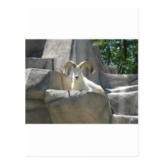 Carte Postale Animaux de zoo