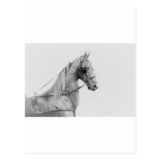 Carte Postale Approvisionnements de Saddlebred ! !