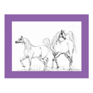 Carte postale Arabe de cheval