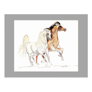 Carte postale Arabe de chevaux