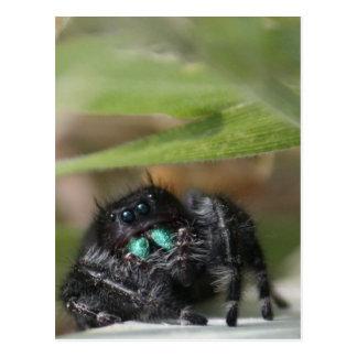 Carte Postale Araignée !
