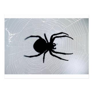 Carte Postale Araignée