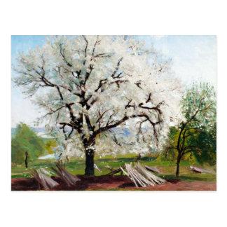 Carte Postale Arbre fruitier fleurissant de colline de Karl