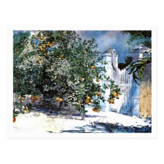 Carte Postale Arbre orange, Nassau par Winslow Homer