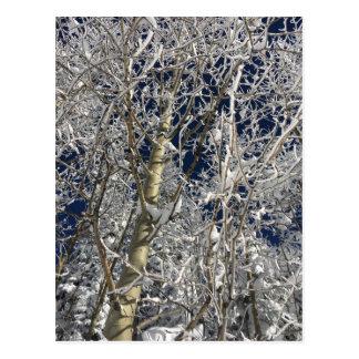 Carte Postale Arbres de glace