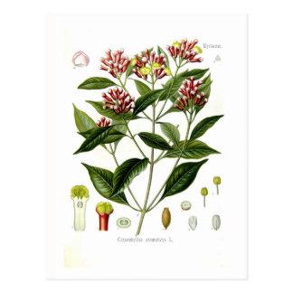 Carte Postale Aromaticus de Caryophyllus (clou de girofle)