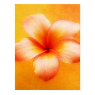 Carte Postale Arrière - plan d'orange de fleur de Plumeria de