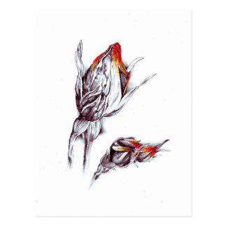 Carte Postale Art de croquis de dessin de fleur fait main
