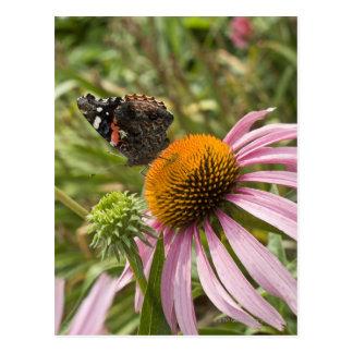 Carte Postale association, symbiotique, aidant, beauté,