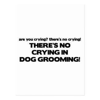 Carte Postale Aucun pleurer dans le Groomer de chien