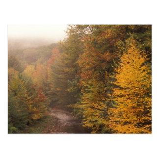 Carte Postale Automne de Berkshires de ruisseau de moulin