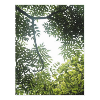 Carte Postale Auvent vert