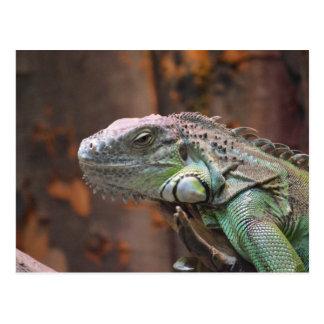 Carte postale avec le lézard coloré d'iguane