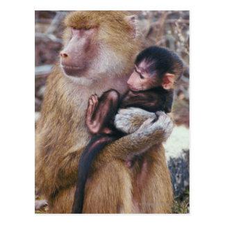 Carte Postale Babouin de mère et de bébé