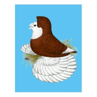 Carte Postale Baldhead de rouge de pigeon de trompettiste